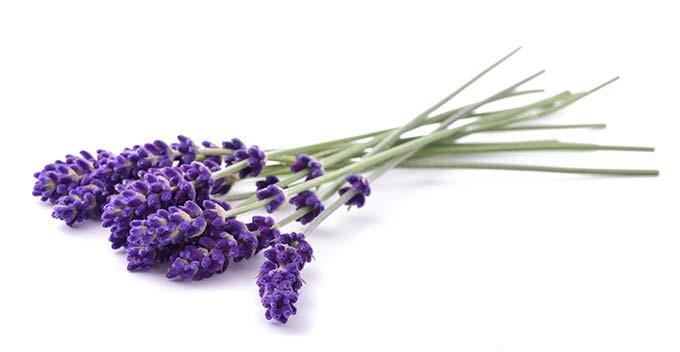 Mayella - Lavender Pure Essential Oil
